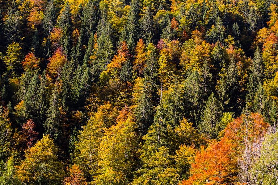 Autumn in Morzine